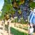 Vinska omotnica: 63 milijuna kuna za ulaganje u vinarije i marketing