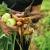 Festival organskih proizvoda BIOFEST u Subotici od 5. do 8. oktobra