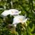 Kala - profinjeni cvjetovi za zatvoreni i otvoreni prostor