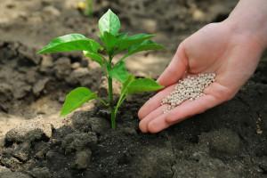 Kako i kada primijeniti gnojiva u povrtnjaku?