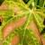 Destruktivna bakterija Xylella fastidiosa – nova prijetnja poljoprivredi