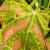 Destruktivna bakterija Xylella fastidiosa – nova prijetnja poljoprivredi regiona