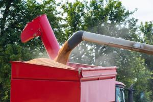 Mogu li usevi pšenice i kukuruza preživeti sušu i kako?