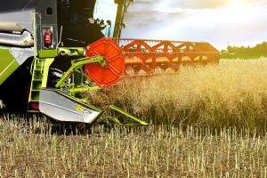 Cijene uljane repice u Njemačkoj porasle zbog manje proizvodnje