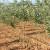 Konkurs Pokrajinskog fonda za kredit za podizanje voćnjaka i vinograda