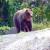 Sa strvinama pred ministarstvo: prosvjedovali protiv medvjeda i vukova
