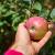 Važnost i pravila đubrenja jabuke