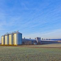 Niske dnevne temperature ne utječu na žitarice, one se dobro razvijaju