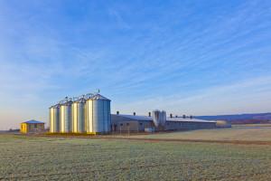 Niske dnevne temperature ne utiču na žitarice, one se dobro razvijaju