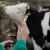 Država već platila, ali pojedini veterinari naplaćuju 10-50 KM po grlu za uzorak krvi i vakcinu