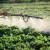 Više od četvrtine pesticida koji se koriste u SAD-u, u Evropskoj su uniji zabranjeni