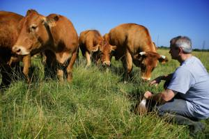 Traže dozvolu za klanje na pašnjacima - zbog dobrobiti životinja i kvalitetnijeg mesa