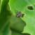 Otjerajte žohare niskim temperaturama, mentom i pelinom