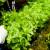 U Japanu agrarna revolucija, bez zemlje i zemljoradnika