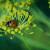 Ove korisne kukce čuvajte u vašem vrtu