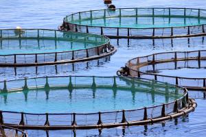 """Kako do potpore u okviru mjere II.7. """"Povećanje potencijala akvakulturnih lokaliteta""""?"""