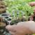 Kako utjecati na brzinu klijanja i nicanja sjemena povrća i cvijeća?