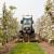 Prednosti travnatih površina i malčiranja voćnjaka