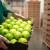 Kada voskirati jabuke i kako izbeći greške u primeni?