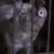 Zatvorio farmu, odselio i ostavio 250 svinja da uginu