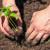 Uzgoj paprike na otvorenom: Na šta posebno treba paziti?