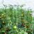 Brojne su prednosti korištenja biostimulatora - kako ih odabrati?