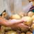 EU: Nova pravila o dozvoljenim ostacima olova i kadmijuma u hrani
