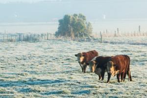 Dolaze temperature za 10°C niže od prosječne listopadske