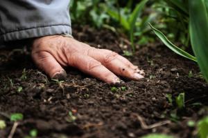 Biološke metode za dezinfekciju zemljišta