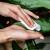 Difenbahija - otporna sobna biljka jedinstvenih listova