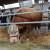 Disco - najteži bik Poljoprivrednog sajma u Novom Sadu