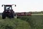 Inkarnatka - zdrava za krave i čisti tlo