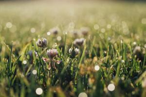 Prihranite travnjake prije zime