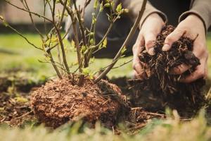 Mikrobiološka gnojiva važna za ishranu voća