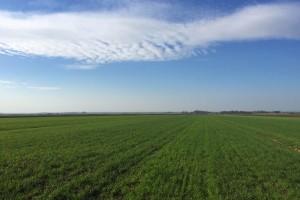 Niču korovi u žitaricama - riješite ih se s provjerenim herbicidima!