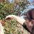 Vrijeme za berbu trnjina i gloginja - nakon mraza odlične za preradu
