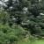 Gazdovanje valjevskim šumama koči administracija?