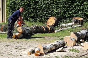 Prioritet treba biti smanjenje krčenja šuma u zemljama u razvoju!