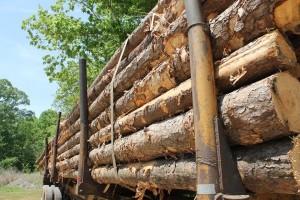 Manjak radnika razlog za manju proizvodnju i prodaju šumskih sortimenata?