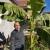 """""""Ulica banane"""" u Jagodini - egzotična biljka popularna među komšijama"""