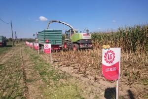 RWA ima hibrid kukuruza koji je iznimno otporan na sušu i odličan za hranidbu peradi
