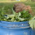 Đubrivo od koprive odlično deluje na biljke, a od nje se pravi i insekticid