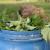 Koprivino gnojivo odlično djeluje na biljke, a od nje se pravi i insekticid