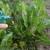 Ulje pitome nane - prirodna zaštita od insekata, puževa, voluharica