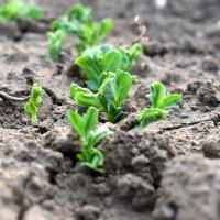 AdubaTec aplikacija izrađuje preporuke za gnojidbu različitih kultura