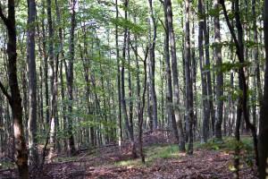 Izmjene Zakona o šumama - rasterećenje gospodarstva za 33 milijuna kuna