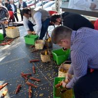 Natjecanje na sajmu OPG-ova: U minuti orunili gotovo 2,5 kg zrna kukuruza