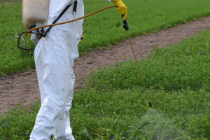 Kako pravilno preračunati potrebne doze pesticida?