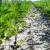 Štete od korova u strnim žitaricama mogu biti velike, vrijeme je za zaštitu