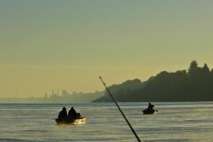 Dunav: Visoka voda - krupna riba